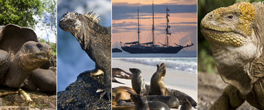 Galapagos Islands Wildlife Royalty Free Stock Photography