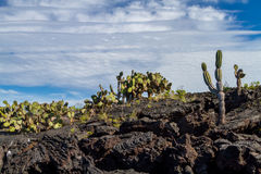 Galapagos Landscape Stock Photos