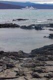Galapagos Marine Iguanas sulla riva con la nave da crociera nel fondo Immagini Stock