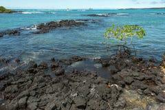 Galapagos Marine Iguanas und Sally Lightfoot Crabs lizenzfreie stockfotografie