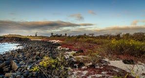 Galapagos Stock Photo