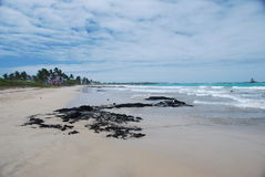 Galapagos Pacific beach. A Pacific beach of the Galapagos islands of Ecuador Stock Images