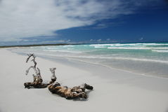 Galapagos Pacific beach Royalty Free Stock Photography