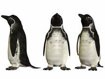 Galapagos Penguin. 3D Render of an Galapagos Penguin Stock Photography