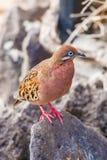 Galapagos a plongé en île d'Espanola Image stock