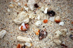 Galapagos sand. This Galapagos sand consist mostly of colorful remains of seashells,bones and other organic Royalty Free Stock Photos