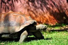 Galapagos-Schildkröte Stockfotos
