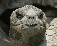 Galapagos-Schildkrötekopf Lizenzfreies Stockbild