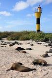 Galapagos Seals royalty free stock images