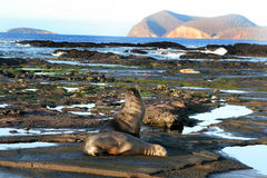 Galapagos Shoreline Royalty Free Stock Photo