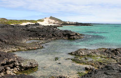 Galapagos Shoreline Royalty Free Stock Photography