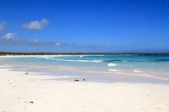 Galapagos strand Arkivbilder