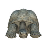 Galapagos Tortoise. 3D digital render of a Galapagos tortoise isolated on white background Royalty Free Stock Photography