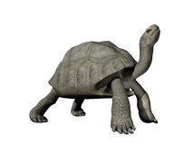 Galapagos tortoise - 3D render. Big Galapagos tortoise isolated in white background Stock Photos