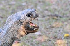 Galapagos Tortoise Face Royalty Free Stock Image