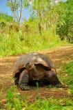 A Galapagos Tortoise stock photo