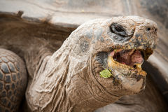 Galapagos Tortoise Head Close Up Low Angle Stock Photography