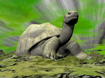 Galapagos tortoise looking at you - 3D render Stock Photography