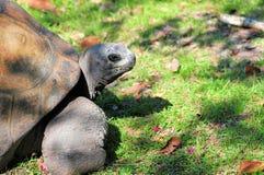Galapagos tortoise portrait Stock Images