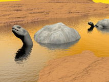 Galapagos tortoises in water - 3D render Royalty Free Stock Image
