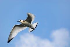 Galapagos-Vogel im Himmel Stockfotos