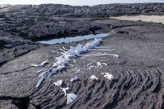 Galapagos wieloryba kościec Obrazy Royalty Free