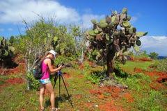 GalapagosWoman photographing prickly pear on Rabida Island in Ga Stock Photo