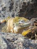 Galapgos Islands Stock Image