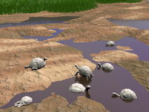 Galapagos tortoises relaxing - 3D render Royalty Free Stock Photos