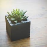Galaretowa Bobowa roślina Obraz Royalty Free