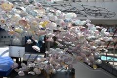 Galaretowa mrowie sztuka przy Krajowym akwarium w Baltimore obraz stock