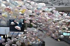 Galaretowa mrowie sztuka przy Krajowym akwarium w Baltimore zdjęcie royalty free