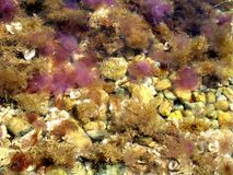 Galaretowa ryba Fotografia Royalty Free