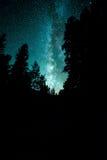 Galassia della Via Lattea sopra gli alberi Fotografia Stock Libera da Diritti