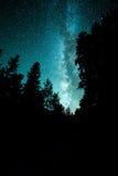 Galassia della Via Lattea sopra gli alberi Immagini Stock