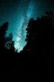 Galassia della Via Lattea sopra gli alberi Immagini Stock Libere da Diritti
