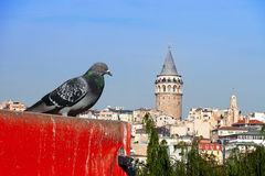 Galata and the pigeon Royalty Free Stock Photos