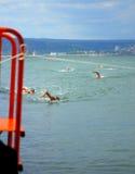 Galata-Varna swimming marathon final Stock Image