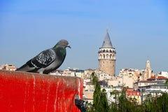 Galata y la paloma Fotos de archivo libres de regalías