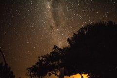 Galaxie et l'arbre photographie stock libre de droits