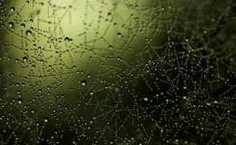 Galaxy. Spider gen web in the morning dew Stock Photography