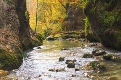Galbena canyon autumn. In Transylvania Stock Photos