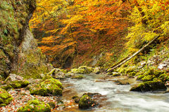 Galbena canyon autumn. In Transylvania Royalty Free Stock Photography