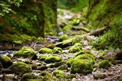 Galbena river in Apuseni mountains Stock Photos
