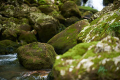 Galbena river Stock Image