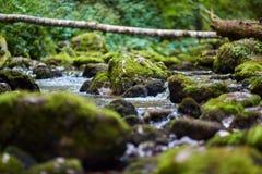 Galbena river and gorge Royalty Free Stock Image