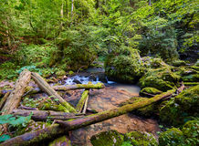 Galbena river and gorge Stock Photography