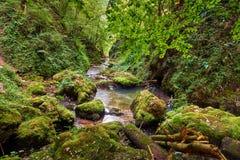 Galbena river and gorge Royalty Free Stock Photo