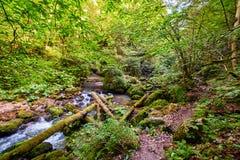 Galbena river and gorge Royalty Free Stock Photos