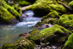 Galbena river and gorge Stock Photo